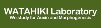 WATAHIKI Laboratory