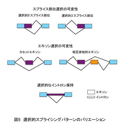 選択的スプライシング - Alternative splicing